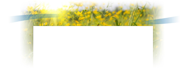 Fleurs ensoleillées